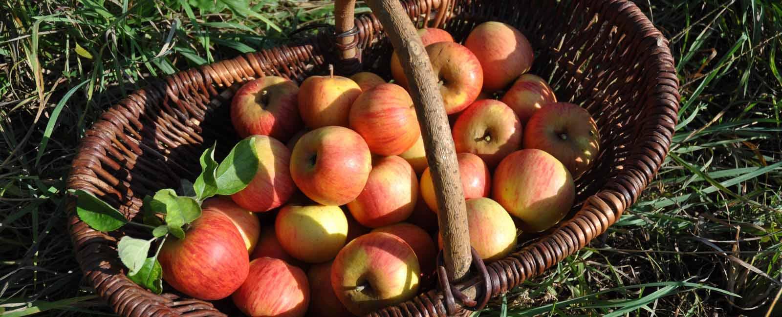 Pommes des alpes verger Arboriculture