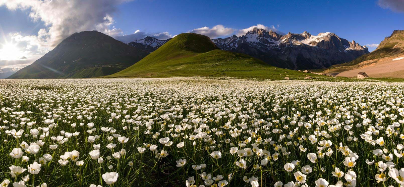 Faune et flore de montagne Hautes-Alpes